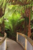 Mystic jungle trail along the Great Ocean Road, Australia. Mystic jungle trail with tree ferns in the tropical rainforest along the Great Ocean Road in South Royalty Free Stock Image
