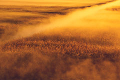 Mystic landscape Stock Photography