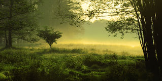 Mystic landscape. Mystic foggy landscape in the morning stock images