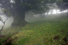 mystic landskap Royaltyfri Fotografi