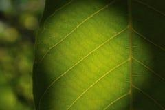 Mystic leaf Royaltyfria Foton
