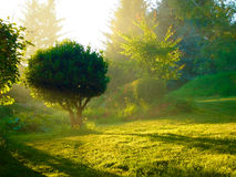 Mystic light Royalty Free Stock Image