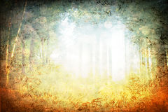 Mystic light burst in forest. Pic Stock Photo