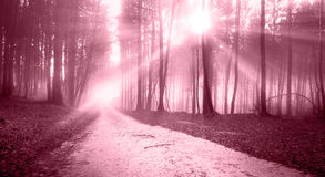 Mystic marsala red sunny light forest road Royalty Free Stock Photography