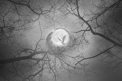 Mystic moon bird circle. Mystic forest scene with a bird flying to a full moon, surrounded by a bird circle and feathers, with leafless branches reaching out to Stock Photo