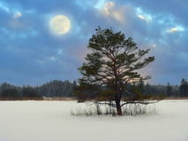 Mystic moonlight scenery in the moor Royalty Free Stock Photo