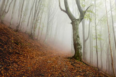 Mystic morning foggy forest landscape Stock Photo