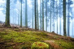 Mystic moss forest in the fog. stock photos