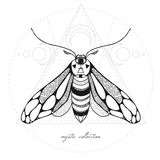 Mystic moth vector illustration Royalty Free Stock Photography
