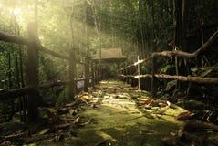 Mystic path. In front of Sungai Buweh waterfall, kenyir, Hulu Terengganu, Terengganu Royalty Free Stock Photo