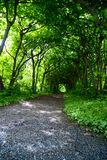 Mystic Path. A mystical path through trees in a garden Royalty Free Stock Image