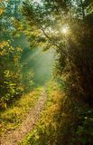 Mystic path in the forest Stock Photography