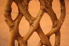 Mystic plant Stock Image