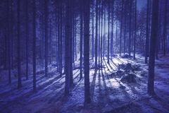 Mystic purple colored forest tree landscape Royalty Free Stock Photo