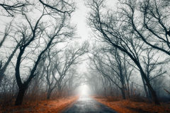 Mystic Road. Fog. Forest on the Khortitsiya (Ukraine Royalty Free Stock Images