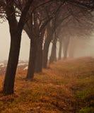 Mystic row of trees Stock Photo