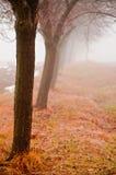 Mystic row of trees. Trees in a row veild in mystic fog Stock Photos