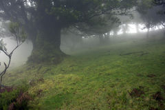 Mystic Scenery. Fog Surrounding The Trees in a mystical scenery Royalty Free Stock Photography