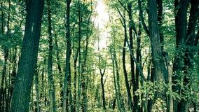 Mystic skog Royaltyfri Foto