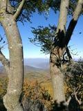 Mystic skog Arkivfoto