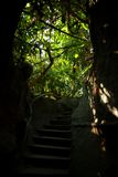 Mystic stairs in a jungle Stock Image