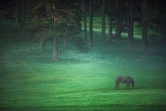 Mystic sunrise over the mountain. Wild horse grazing in the mead stock image