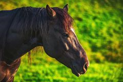 Mystic sunrise over the mountain. Wild horse grazing in the meadow, Bulgaria, Europe royalty free stock photography
