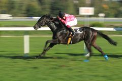 Mystic swing in horse racing in Prague Royalty Free Stock Images