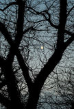 Mystic Textured Tree Stock Photos