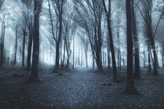 Mystic trail through the fog Stock Images