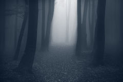 Mystic trail through the fog Royalty Free Stock Photos