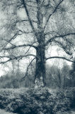 mystic tree Arkivbild