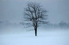 Mystic Tree. Tree in a field surrounded by fog and snow Stock Photo