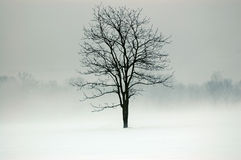 Mystic Tree. Tree in a field surrounded by fog and snow Stock Photography