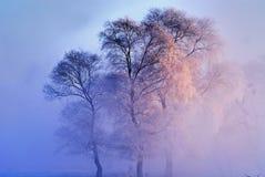 mystic tree arkivfoto