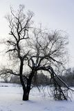 Mystic tree on a frozen lake. Mystic tree with snow on it staying on a frozen lake Stock Photography