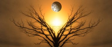 Tree of Life. Mystic Tree of Life. Moon in The Sky. Sunset or Sunrise royalty free stock images