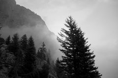 Mystic tree silhouette in a foggy evening in mountains Royalty Free Stock Photo