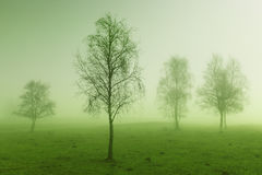 Mystic tree Royalty Free Stock Photography