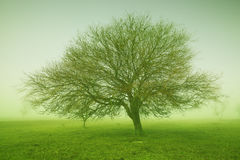 Mystic tree. Some trees in mysterious green morning light Stock Photo
