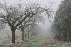 mystic trees arkivbild