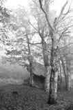 Mystic trees in fog Stock Photos