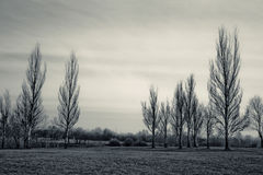 Mystic trees Royalty Free Stock Photography