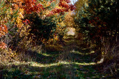 Mystic tunnel of the branches in the autumn forest Stock Photography