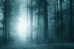 Mystic turquoise blue forest royalty free stock photos
