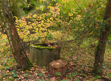 Mystic well in the forest in autumn Stock Photography