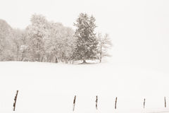 Mystic winter landscape Stock Photography