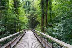 Mystic wood path in forest Royalty Free Stock Images