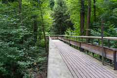 Mystic wood path in forest Stock Image