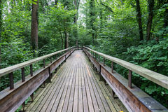 Mystic wood path in forest Royalty Free Stock Photography